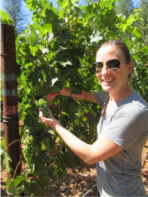 Our daughter Bridget is cutting off a cluster growing just above the desirable fruit zone.